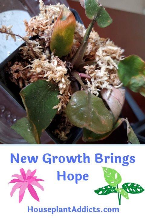 New Growth Brings Hope