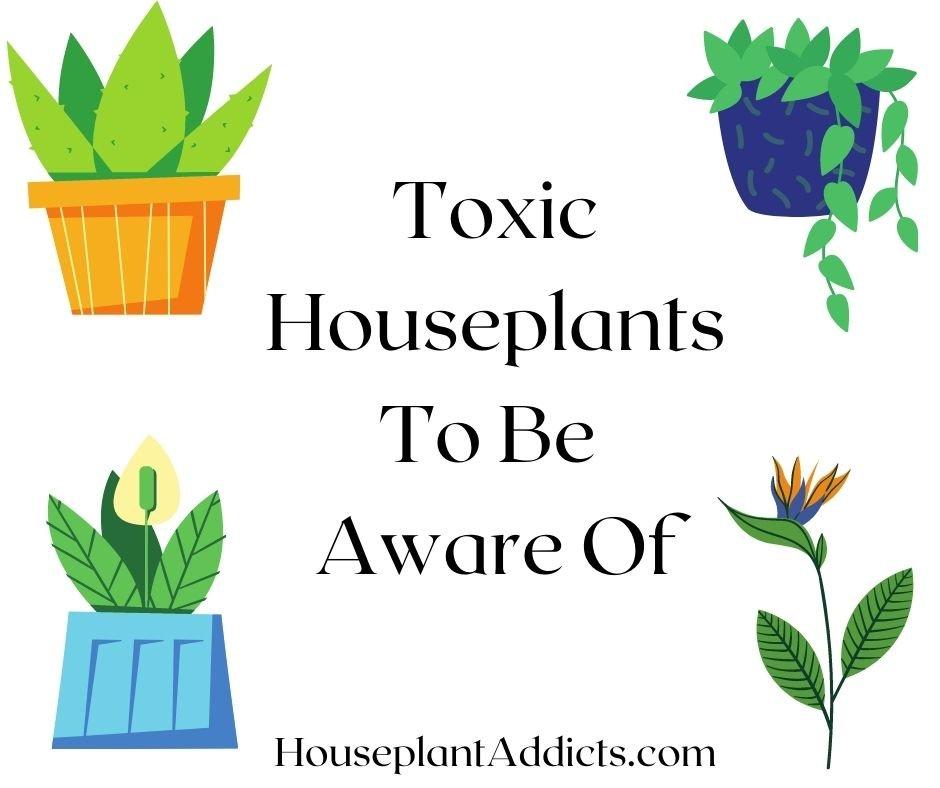 Toxic Houseplants To Be Aware Of