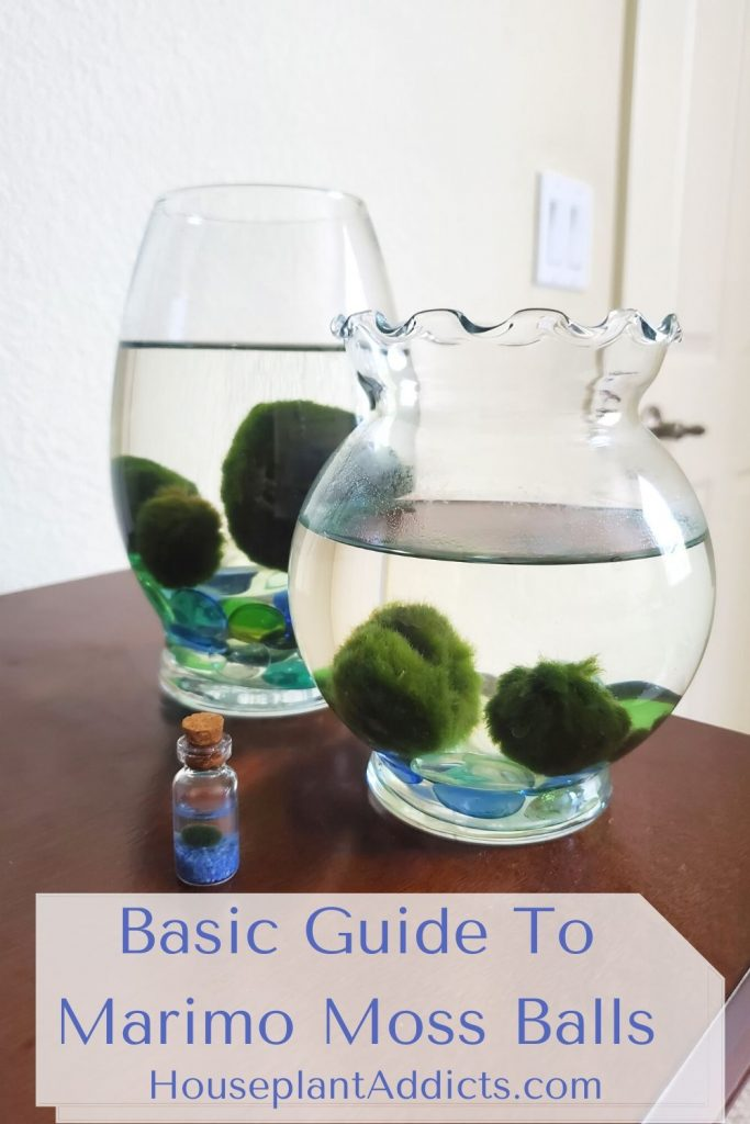 Basic Guide To Marimo Moss Balls