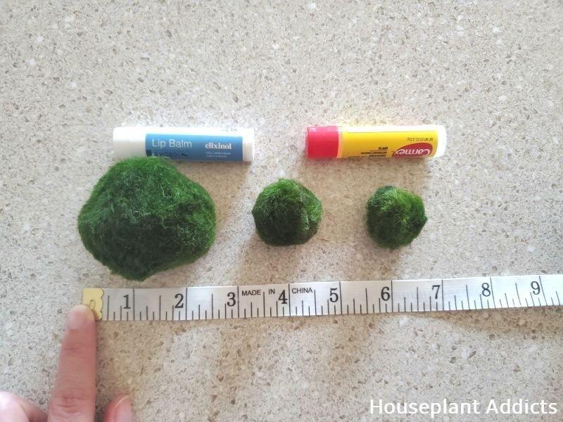 Measuring Moss Balls