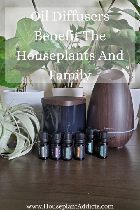 Oil Diffusers Benefit The Houseplants And Family