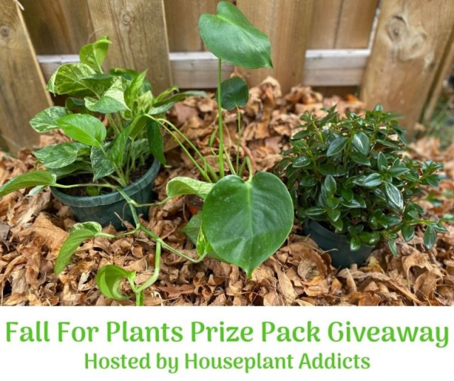 Fall For Plants Prize Pack Giveaway