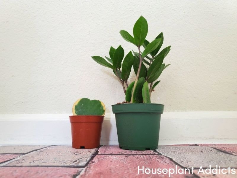 Low Maintenance Plants To Add To Your Workspace - social media