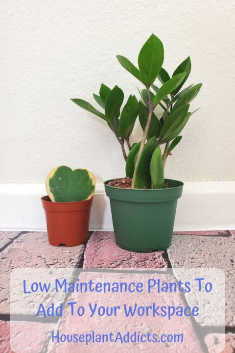 Low Maintenance Plants To Add To Your Workspace