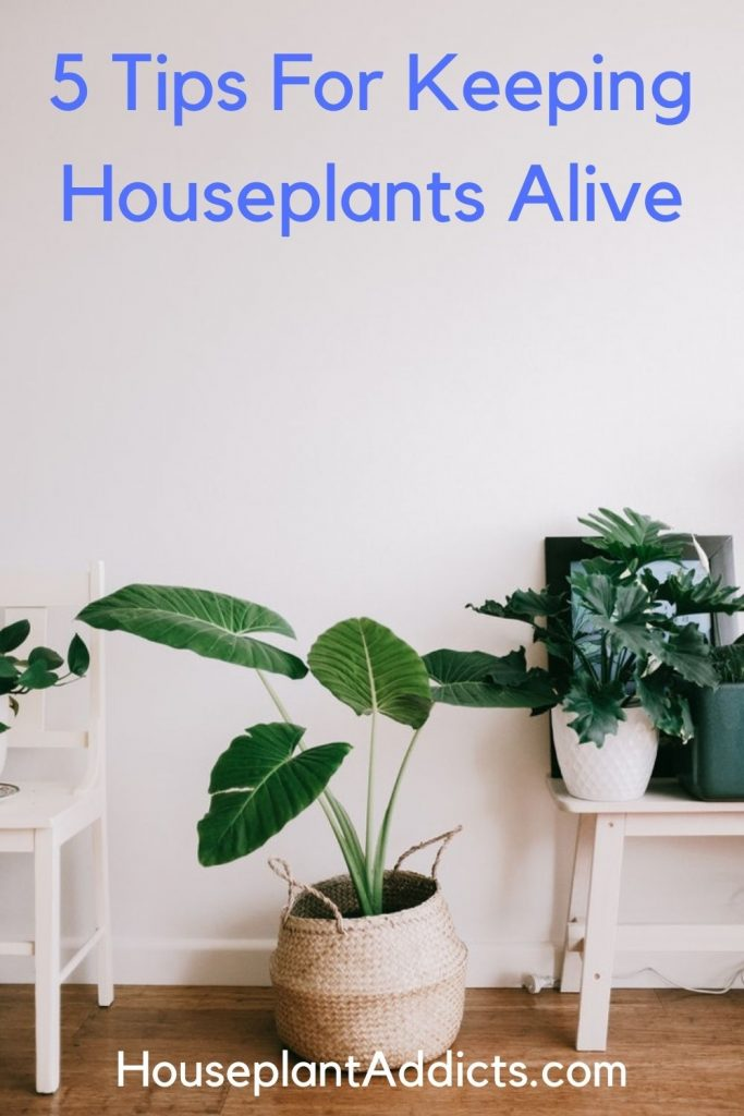 5 Tips For Keeping Houseplants Alive