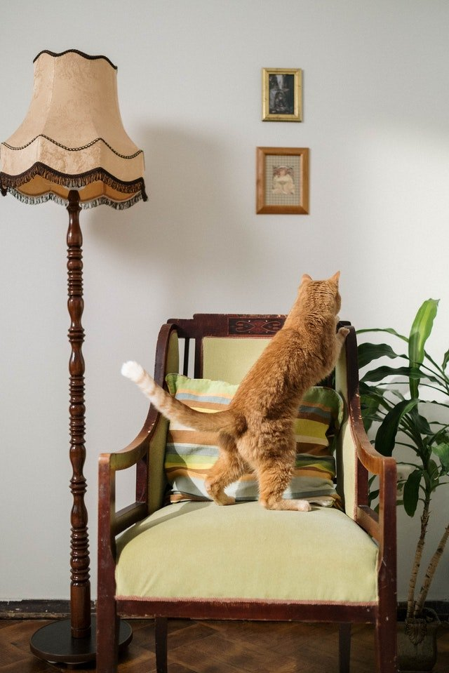 Cat climbing on a chair to look at plant