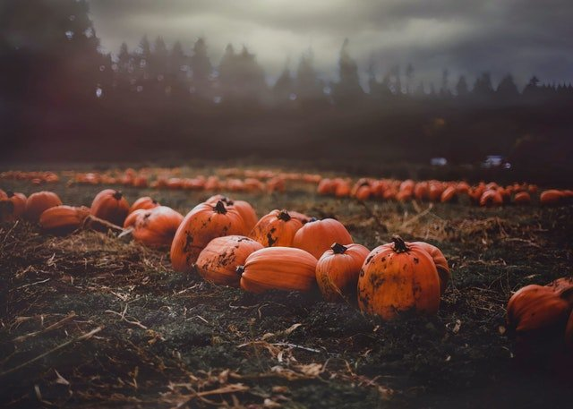 Grow Your Own Pumpkins - social media