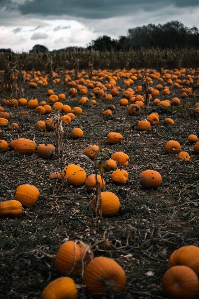 Grow Your Own Pumpkins