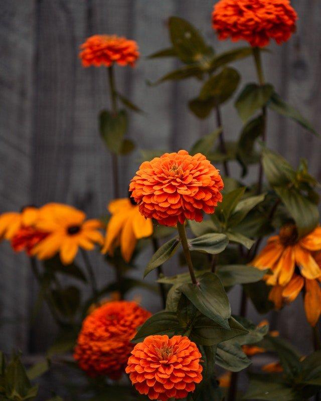 Unique Ways To Use Marigolds
