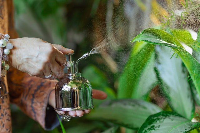 How To Use Neem Oil With Plants - social media