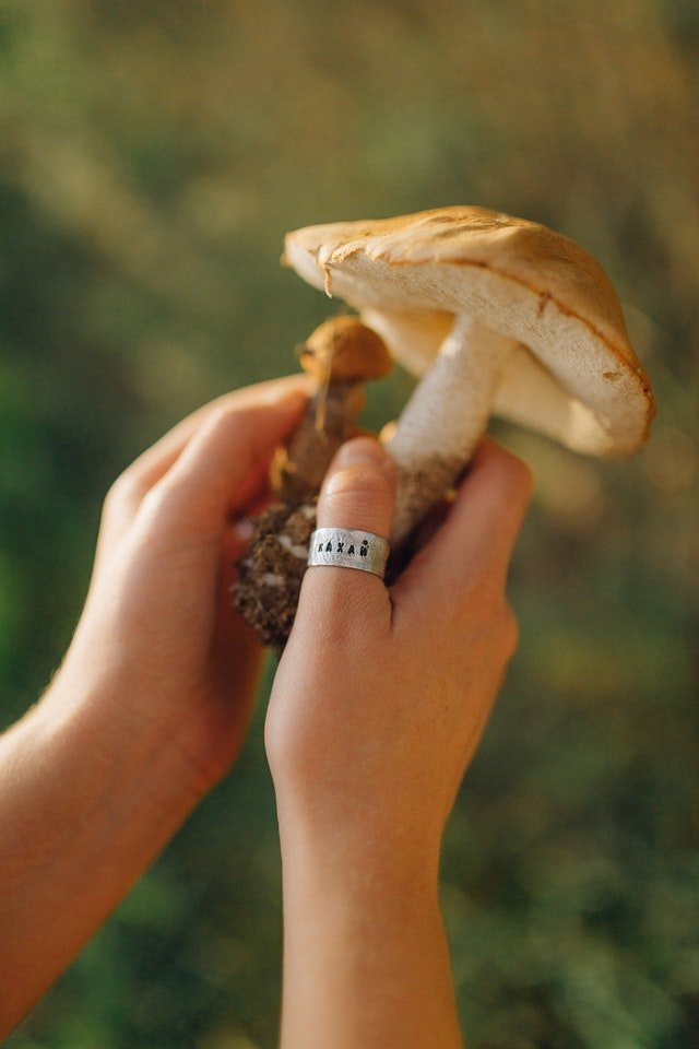 Mushrooms Growing In My Houseplants What Does It Mean