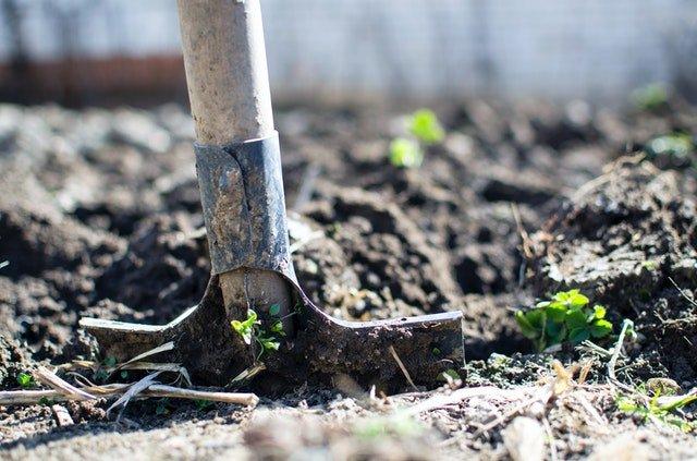 Tending soil in the garden