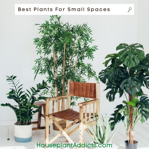 Best Plants For Small Spaces